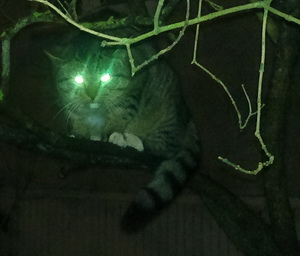 cat in a tree at night