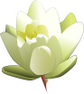 leland_mcinnes_Water_Lily